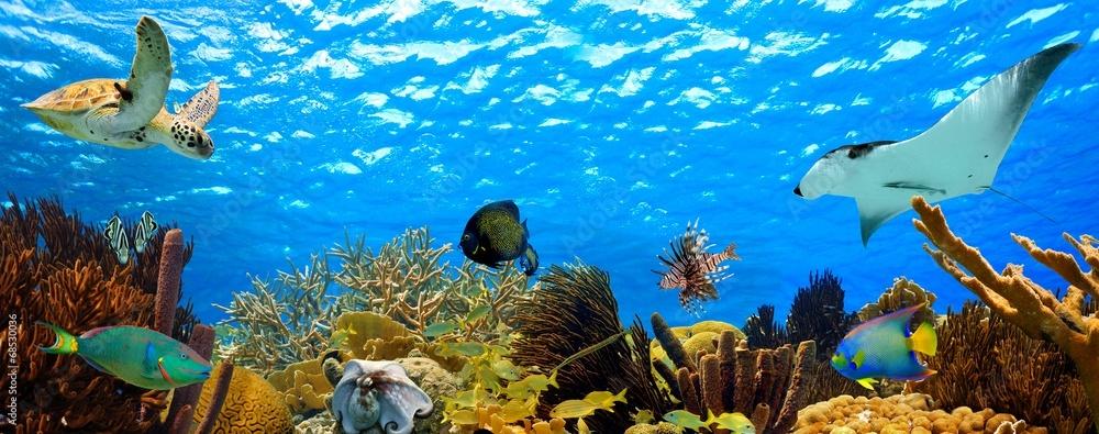 Fototapeta underwater panorama of a tropical reef in the caribbean