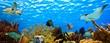 Leinwandbild Motiv underwater panorama of a tropical reef in the caribbean