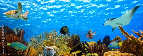 Spoed Foto op Canvas Koraalriffen underwater panorama of a tropical reef in the caribbean