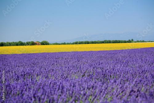 Spoed Foto op Canvas Violet valensole provenza francia campi di lavanda fiorita