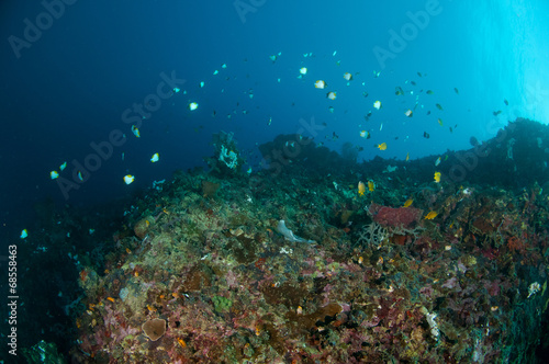 Staande foto Koraalriffen Reef fishes swimming above various coral reefs