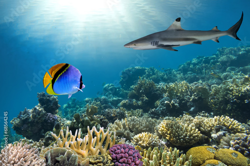 Poster Sous-marin Underwater image of coral reef with shark