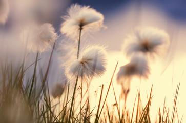 Fototapeta na wymiar Polar flowers