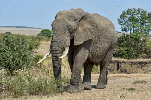 Garden Poster Elephant Kenia-Elefant-19567