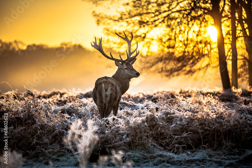 Red deer Canvas-taulu