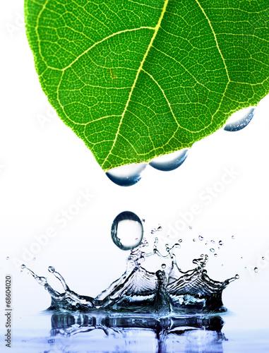zielony-lisc-z-kroplami-wody-i