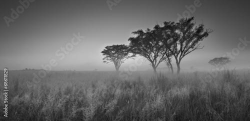 zimny-bezchmurny-ranku-wschod-slonca-z-drzewami-trawa-i-mgla-w-arti