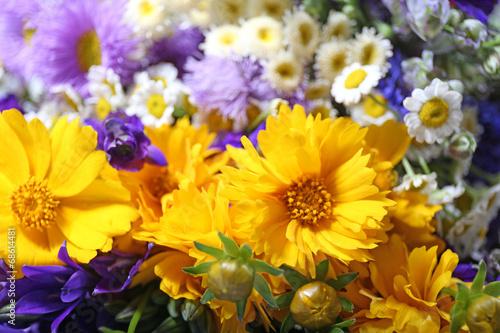 Fototapety, obrazy: Beautiful wild flowers close up