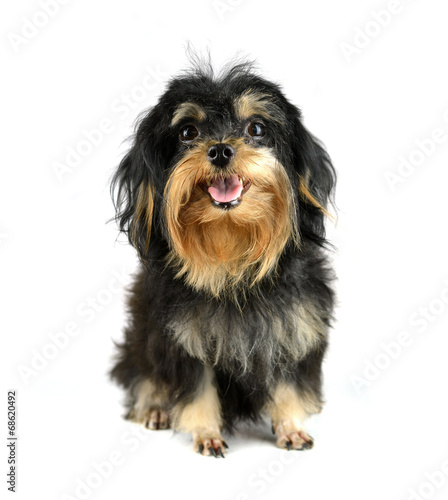 Photographie  Mixed-breed dog puppy on white background