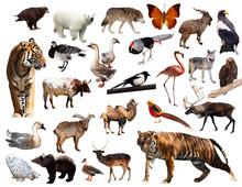 Asian Fauna