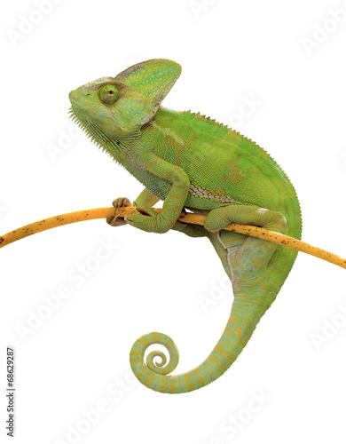 In de dag Kameleon Chamäleon