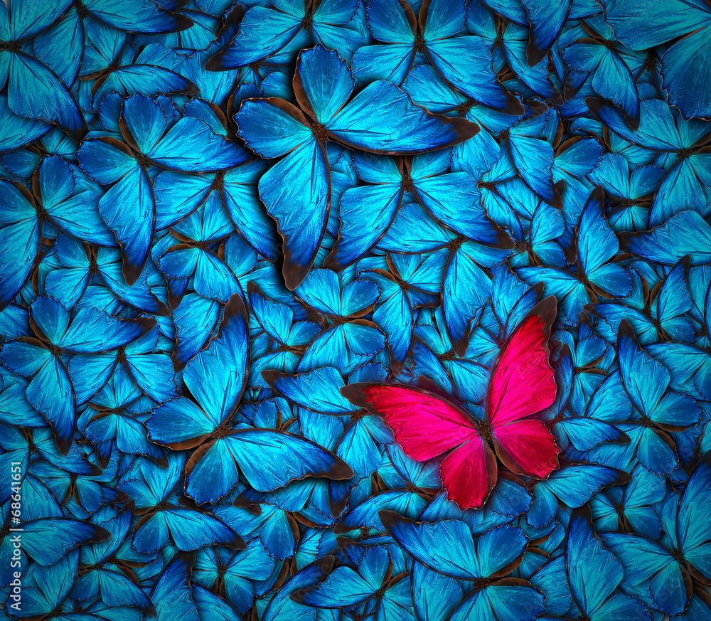 Fototapeta beautiful butterfly background