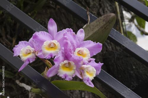 Papel de parede Arranjo floral com orquídeas