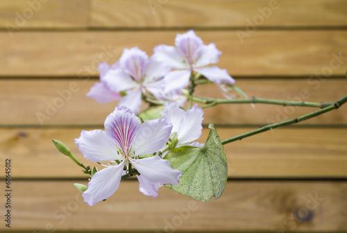 Fotografia Arranjo floral com pata-de-vaca