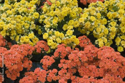 Fotografia Arranjo floral