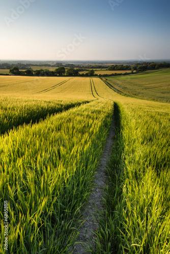 Deurstickers Honing Beautiful landscape wheat field in bright Summer sunlight evenin