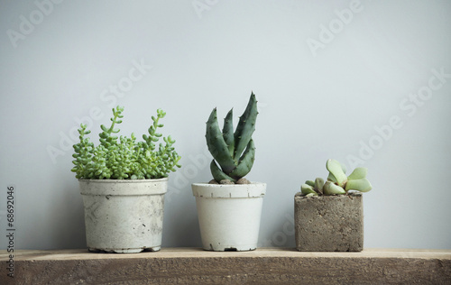 Photo  succulents in diy concrete pots in scandinavian home decor