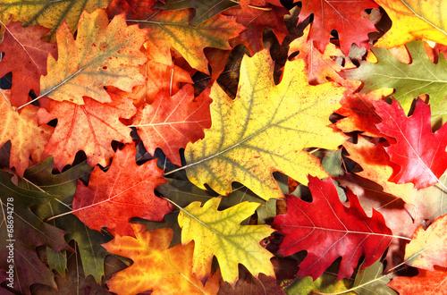 Photo  Tree autumn leaves