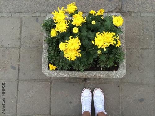 Photo  yellow flowers