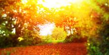 Way To Autumn - Abstract Photo In Autumn