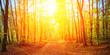 Sunny, golden autumn
