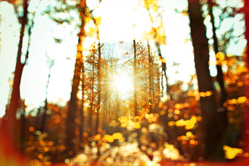 Autumn forest - abstract photo with selective focus