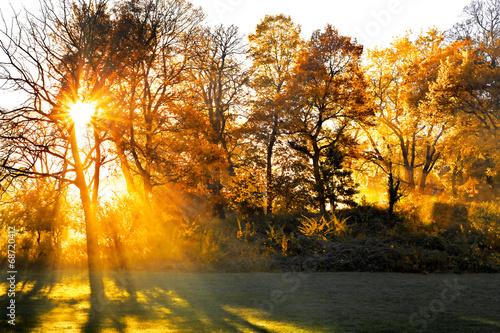 Fototapety, obrazy: Sunset in autumn park.