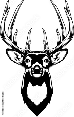 Whitetail Deer Head Wall mural