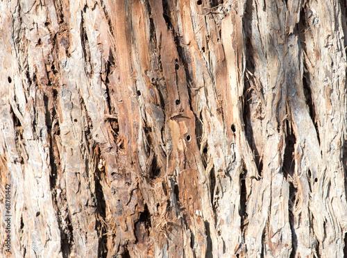 Canvas Prints Textures background of tree bark