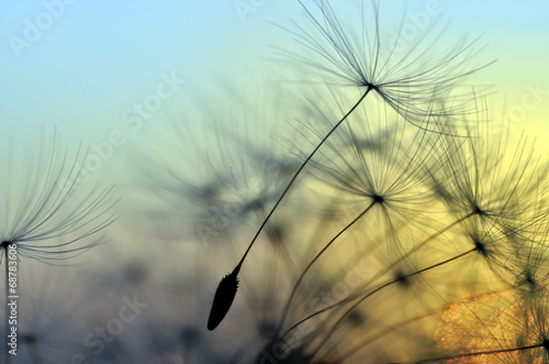 La pose en embrasure Zen Golden sunset and dandelion, meditative zen background