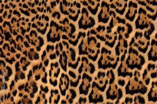 Door stickers Leopard Jaguar, leopard and ocelot skin texture