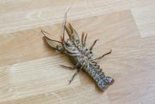 Crayfish Upside Down Parquet, Escape Failed Concept.