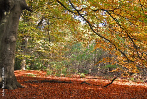 Photo Stands Nature Grote boom in de herfst.