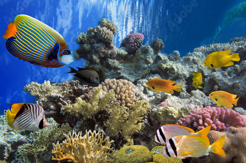 Fototapety, obrazy: Tropical fish and Hard corals in the Red Sea, Egypt