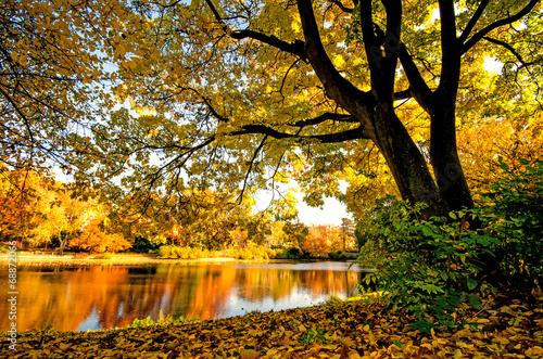 zlota-jesien-ze-spokojnym-jeziorem-w-parku