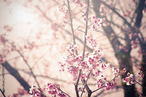 Vintage Cherry blossom background Poster