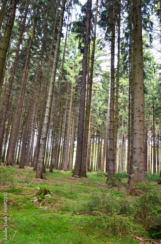 Waldfrieden © alisseja