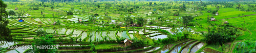 Foto op Plexiglas Indonesië Rice paddy