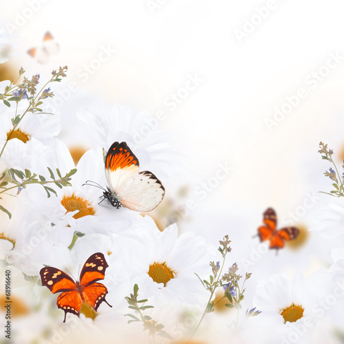 wiosna-bukiet-stokrotek-i-motyli-kwiatowy-tlo