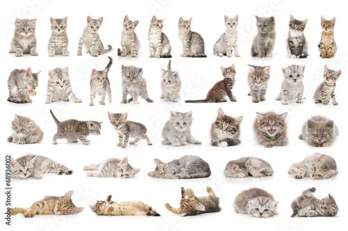 Photo  cat set