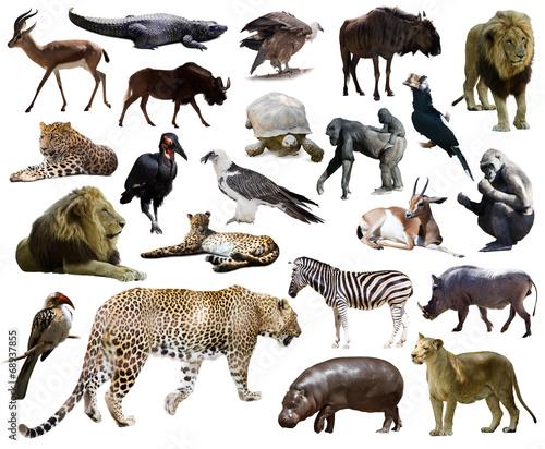 Fotobehang Leeuw Set of leopard and other African animals.