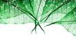 Leinwandbild Motiv Blätter mit Regentropfen