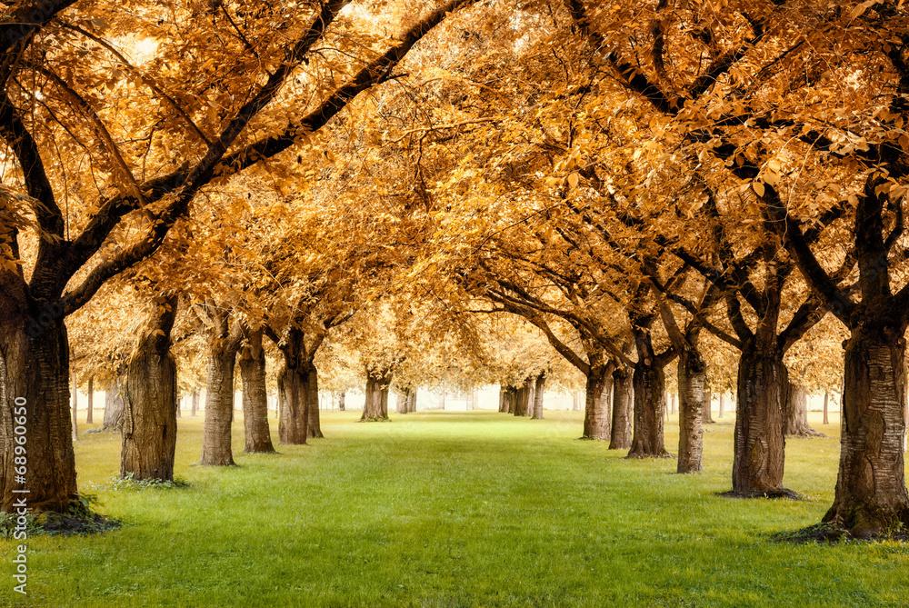 Fototapety, obrazy: Paradiesische Herbstszene