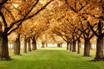 FototapetaParadiesische Herbstszene