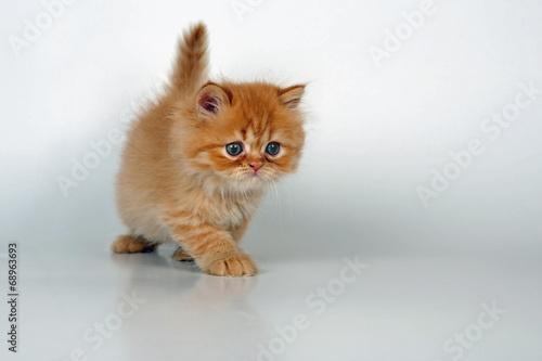 Kleine Katze kommt