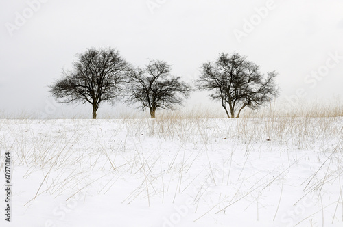 Three Trees in Snow