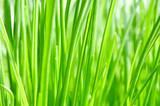 Lang, grün und dünn