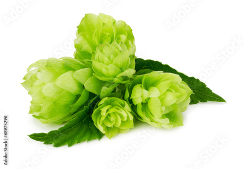 Fotografie, Obraz  green hops isolated on the white background