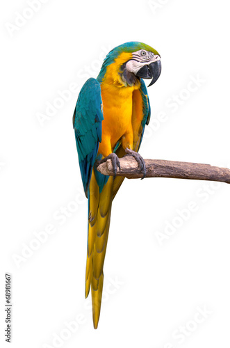 Parrot macaw isolate on white background Canvas Print