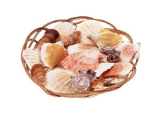 Shells Seashells And Snails  Several Species In Basket
